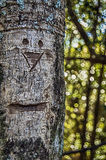 A face in the forest Stock Photo