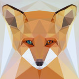 Face of a fox Stock Images
