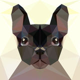 Face of a French bulldog Royalty Free Stock Photography