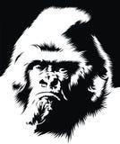 Face of gorilla Stock Photography