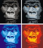 Face of gorilla. In the 4 different colors Royalty Free Stock Image