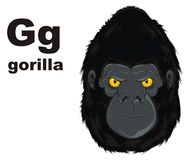 Face of gorilla and abc. Angry face of gorilla with his name and letters g Stock Illustration