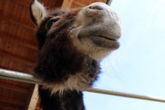 Face and head of a donkey Stock Photo