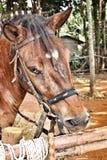 Face horse Stock Photo