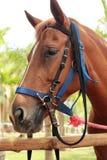 Face horse in the farm Royalty Free Stock Photos