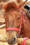 Face horse in the farm Stock Photos