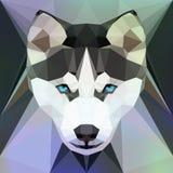 Face of a Husky dog Royalty Free Stock Photography