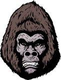 Face irritada do gorila Imagem de Stock Royalty Free