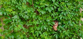 Face among ivy. Royalty Free Stock Photography