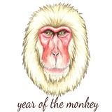 Face of Japanese monkey. Watercolor vector illustration on white background.Poster for New Year 2016 Royalty Free Stock Images