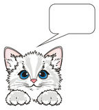 Face of kitten with sign Royalty Free Stock Images