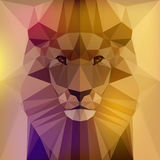 Face of a lion Royalty Free Stock Photo