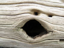 Face on the log. Hole in the log looks like face Stock Photos