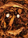 Face made from chesnuts and dry leaves. Autumn park ground with colorful chesnuts leaves Stock Photography