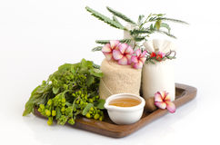 Face mask with Cassod Tree, tamarind leaves and honey. Stock Photos