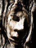 Face na madeira Fotos de Stock Royalty Free