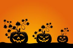 Face Of Pumpkin Stock Images