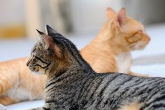 Face off. Two cats facing different directions Royalty Free Stock Images