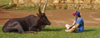 Face-off de taureau de femme photo stock
