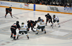 Face off in Ice Hockey Game. Face off between Clarkson University and Princeton University in NCAA Ice Hockey Game Stock Photo