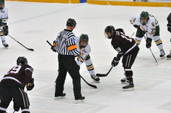 Face off in Ice Hockey Game. Face off between Clarkson University (white) and Brown University (dark) in NCAA Ice Hockey Game Stock Images