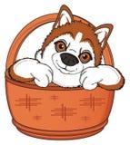 Face of orange husky with basket Royalty Free Stock Photos