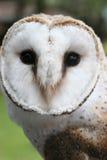Face of an Owl Royalty Free Stock Photos