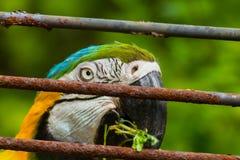Face parrot Stock Photo