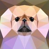 Face of a Pekingese dog. Vector illustration. Stock Photos
