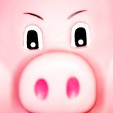 Face Piggy Fotos de Stock