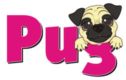 Face of pug peek up from word. Happy snout of beige mops stick out from pink letters pug Stock Photos
