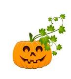 Face of pumpkin Stock Image