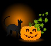 Face of pumpkin and black cat Stock Images