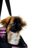 Face of puppy dog in bag Stock Photo