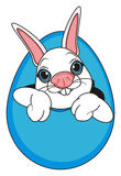 Face of rabbit peek up from egg. Smiling snout of white easter bunny peek up from large blue egg Stock Photo