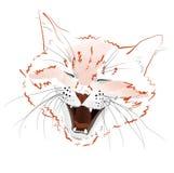 Face red cat Stock Photos