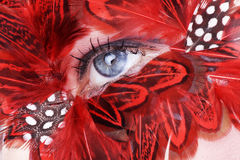 Face with red feathers close up Stock Images
