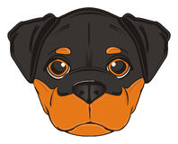 Face of rottweiler Stock Images