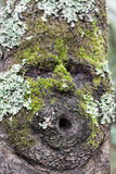 Face shape on tree Royalty Free Stock Images