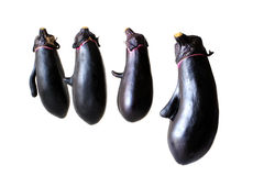 Face shaped Eggplant on white background Stock Image