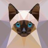 Face of a siamese kitten Royalty Free Stock Photos