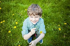 Face of smiling happy boy outside picking flowers. Face of smiling, happy five year old boy with blue eyes outside sitting in green grass picking yellow royalty free stock image