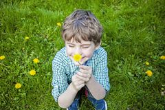 Face of smiling happy boy outside smelling flowers. Face of smiling, happy five year old boy with blue eyes outside sitting in green grass picking yellow royalty free stock photography
