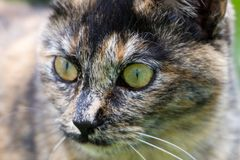 Face of a stray cat Stock Images