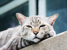 Face of stray cat on the cement wall Stock Photography