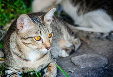 Face of stray cat. Close up face of stray cat hiding on the garden Royalty Free Stock Photo