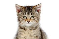 Face of tabby kitten Stock Photo