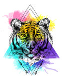 Face of tiger illustration. Sketch vector illustration with face of tiger. Boho style. Drawing by hand. Us for poster, tattoo, card, postcard, web design Royalty Free Stock Images