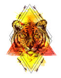 Face of tiger illustration Stock Image