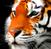The Face of the Tiger Strong Color stock illustration